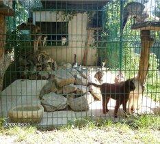 ecole du chat maursois 1