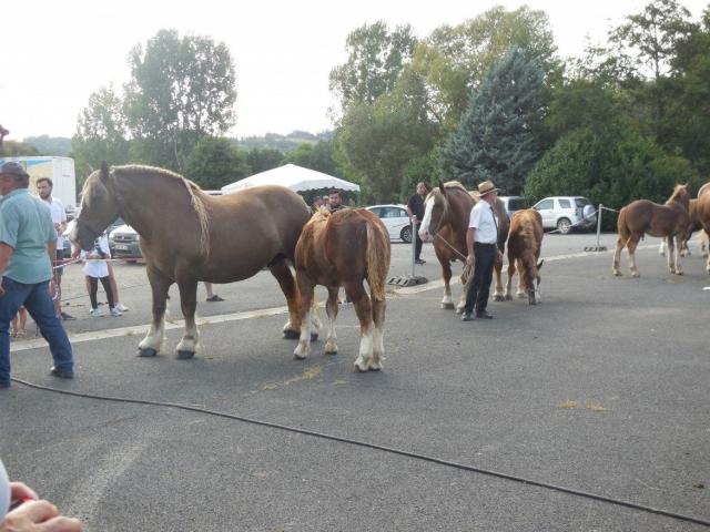 Concours cantonale des chevaux de race lourde, Foirail de Maurs