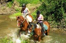 Chevaux de centre equestre