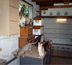 ecole du chat maursois 2